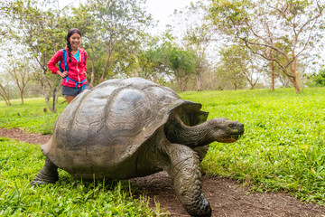 Photo sur Aluminium Tortue Galapagos Giant Tortoise and woman tourist on Santa Cruz Island in Galapagos Islands. Animals, nature and wildlife photo close up of tortoise in the highlands of Galapagos, Ecuador, South America.