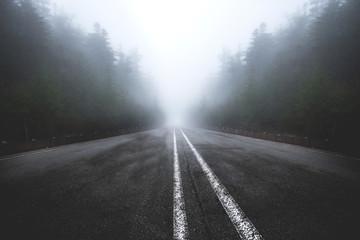 Fototapeta asphalt road goes through a misty dark , pine tree forest , japan obraz