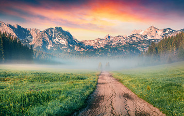 Papiers peints Pistache Unbelievable summer sunrise in Durmitor Nacionalni Park. Spectacular foggy view of of Montenegro countryside, Zabljak town location. Beautiful world of Mediterranean countries.