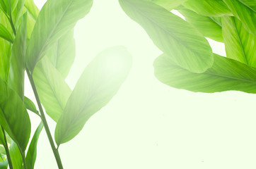 Tropical leafs isolated on white background Wall mural