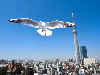 Fotomurales - 東京スカイツリーとカモメ