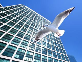 Fotomurales - 高層ビル街を飛ぶカモメ