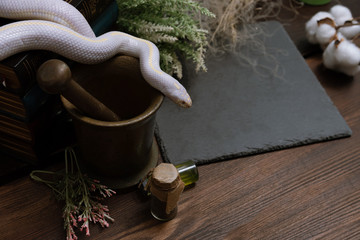White American royal snake on the background of witchcraft accessories, alchemical instruments and ingredients. Mock up of empty tile dark slate. herbs, mortar, feather and cotton bolls. Halloween