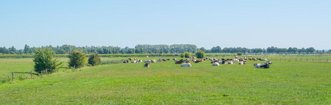 Dutch summery polder landscape