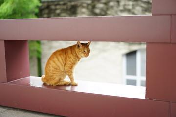 増上寺のネコ