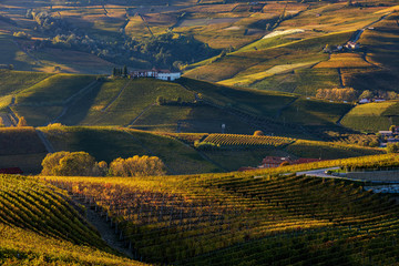 Autumnal vineyards and hills of Langhe in Italy.