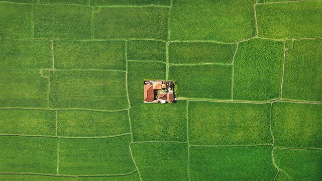 Farm in the middle of green fields, aerial view of geometry lines