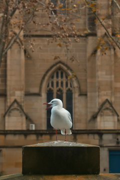Cheeky seagull in the city