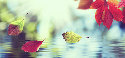 tinted image of autumn leaves on a background of the water surface closeup