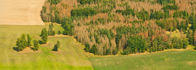 A Czech forest showing the effects of the bark beetle infestation. This affects many of the trees in the forest.
