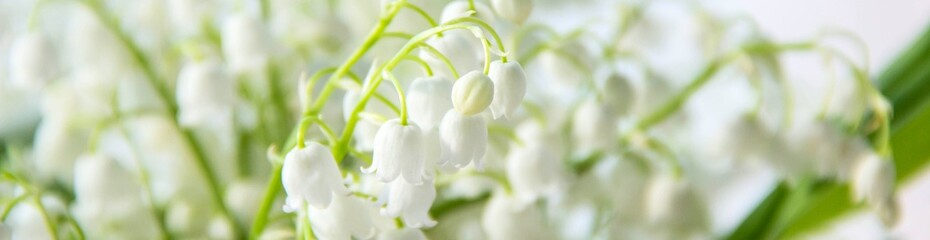 Aluminium Prints Lily of the valley banner of Lily of the valley flowers. Natural background with blooming lilies of the valley lilies-of-the-valley