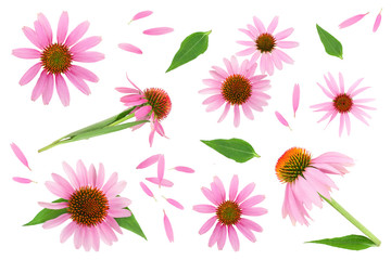 Coneflower or Echinacea purpurea isolated on white background, Top view. Flat lay.
