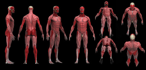 Muscle anatomy of male multiple poses black floor isolated 3d render