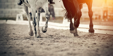 Legs of two sports horses galloping around the arena.