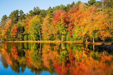 Wall Murals Honey Colorful foliage reflections in pond water on a sunny autumn day in New England
