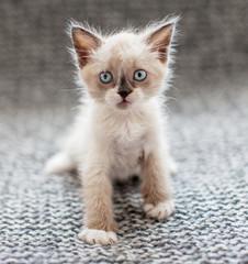 Kitten on a knitted blanket