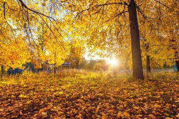Garden Poster Bright tree in the sunny autumn park