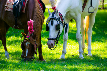south indian horse photo shoot