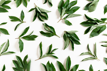 Pattern made from green leaves on white background