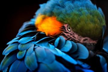 blauer Papagei