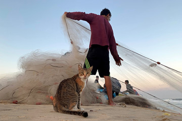 Cat looks on as a Palestinian fisherman pulls a net on a beach in the northern Gaza Strip