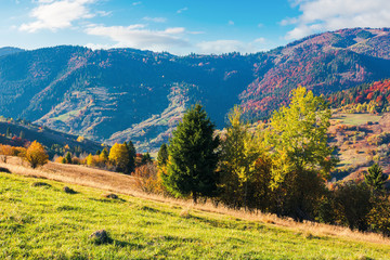 wonderful sunny autumn day in mountains. great views of carpathian rural landscape. trees in colorful foliage on the hill, grassy meadow on the slope. ridge in the distance beneath a sky with clouds