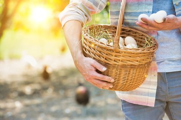 Close up of Farmer putting organic eggs in a brown basket on his farm