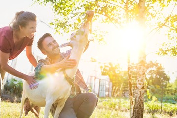 Husband and wife feeding goat in farm with yellow lens flare in background