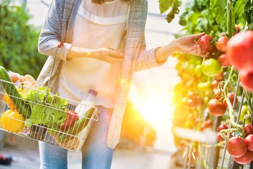 Woman carrying basket while buying and picking tomatoes in greenhouse with yellow lens flare in background
