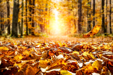 Autumn leaves background in forest and free space for your decoration.