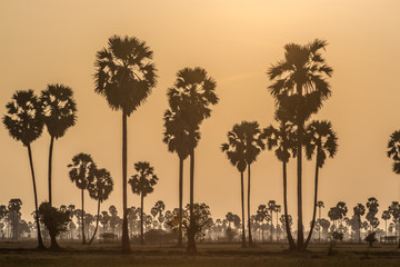 Sunset over Palm trees in Cambodia