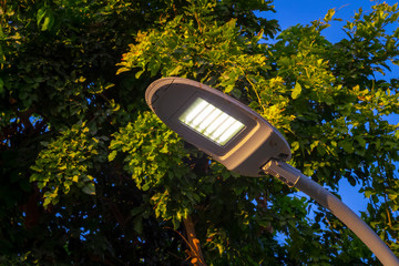 Street LED lighting in the garden, iron pole. Fotomurales