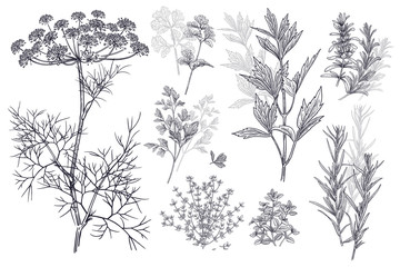 Spice for flavouring food. Dill, coriander or cilantro, thyme, parsley, lovage, estragon or tarragon, rosemary.