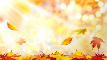 Autumn landscape with sunlight bokeh