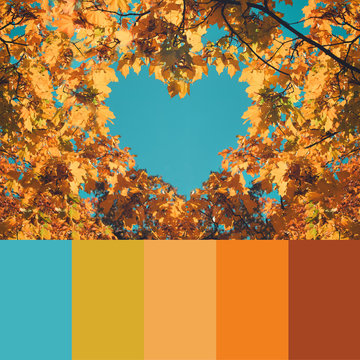 Trend fall 2020 Color palette with autumn leaves and sky. Collage with natural autumn colors swatch.
