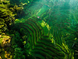 Garden Poster Rice fields Bali, Indonesia. Aerial drone view. of Rice Terrace at Tegalalang