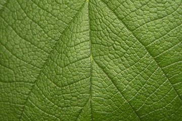 Tree green leaf close up, macro texture