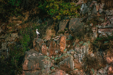 White stork resting on a steep cliff of Shershnyans'ka skelya Wall mural