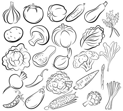 Set of vegetables. Collection of black and white stylized vegetables. Linear art fresh food. Vector illustration of products for the store. Tattoo.