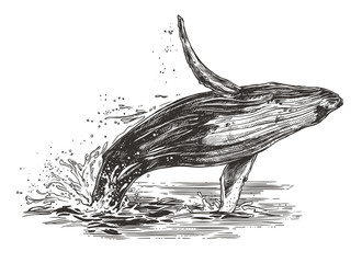 Vector illustration of jumping humpback whale in the ocean. Sketch style Papier Peint