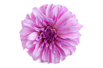 Cadres-photo bureau Dahlia Dahlia flower. On white background. Close-up.