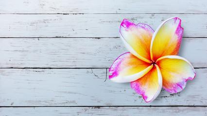 In de dag Frangipani Leelawadee flower isolated