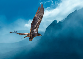 Bald Eagle Over Foggy Mountains...Some Native Peoples Believe the Eagle can Take Your Dreams to Heaven