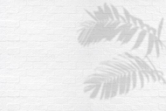 Tropical palm leaves ornamental foliage plant shadows on white brick wall texture background.