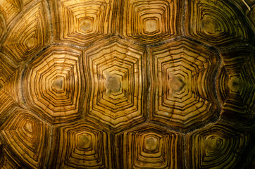 Papiers peints Tortue African spurred tortoise shell texture detail.