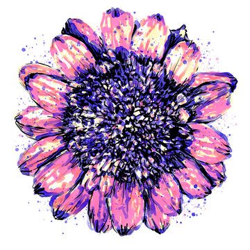 Anthophyta 062a - Hand painted Scabious flower illustration. Pink, purple & blue watercolour and black ink on white background.