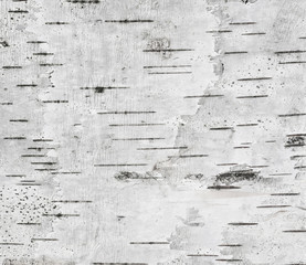 Gray background with horizontal stripes based on the texture of the birch bark