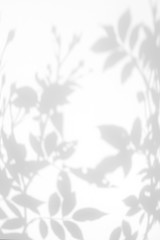 Overlay effect for photo. Gray shadow of the wild roses leaves and flower on a white wall. Abstract neutral nature concept blurred background. Space for text.