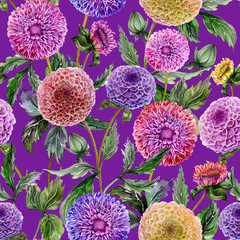 Beautiful purple,red and yellow dahlias flowers with green leaves on violet background. Seamless floral pattern. Watercolor painting. Hand drawn illustration.