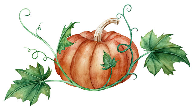 Watercolor composition of an orange pumpkin and green leaves. Autumn illustration.